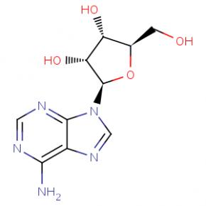 Vitamin B8 - adenozin